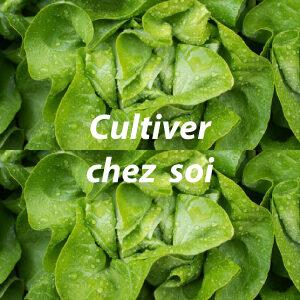 CULTIVER CHEZ SOI